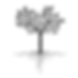 arbre racine nue.png