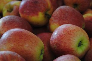 Pomme Gala Direct Producteur Bonnes 86 Jardin