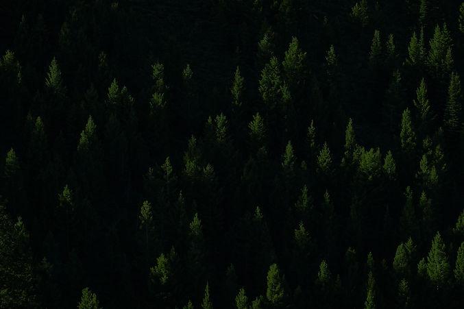 pine tree bg.jpg