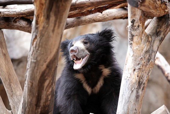 Happy bear 1000x1000