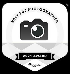 best pet photographer Denvergiggster-pet.png