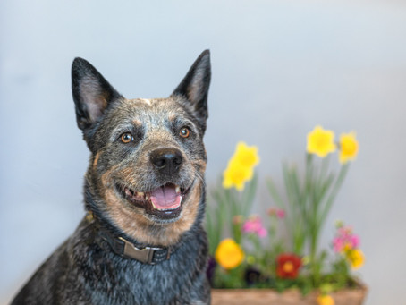 What to do if your dog eat... Gaelle Pet Photography Denver