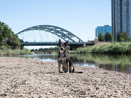 Summer safety tips for your companion.  Denver pet photography.