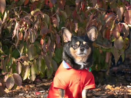 Denver dog photographer