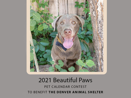 Beautiful Paws pet calendar contest 2021 now open