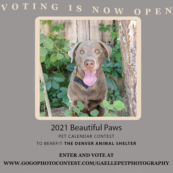 Beautiful Paws Pet calendar contest 2021