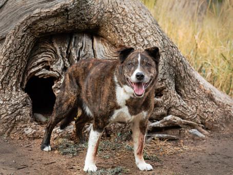 Beautiful Paws Pet Calendar 2022 Denver Pet Photography