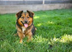 Gaelle Pet Photography Denver