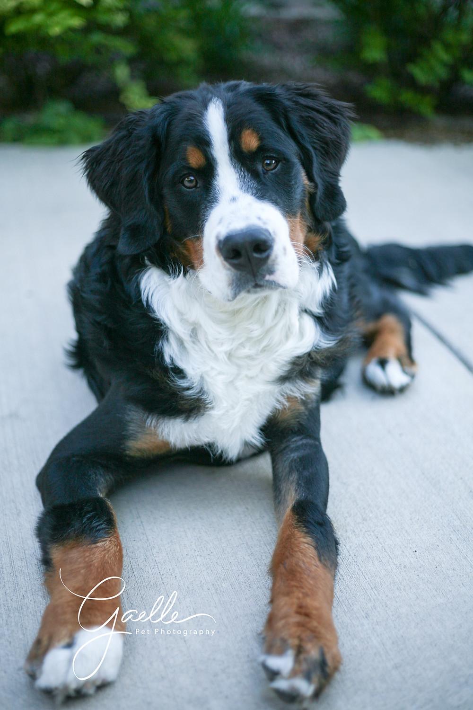 A cute puppy!