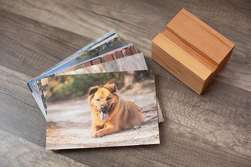 Gaelle Pet Photography Denver Album bloc