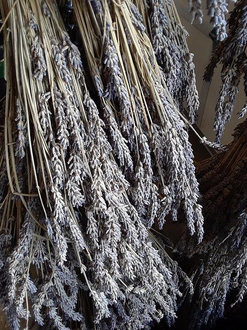 Dried Grosso Bunch