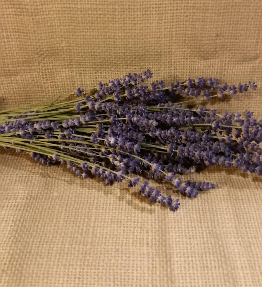 Fresh harvested folgate lavender from Cowlitz Falls Lavender Company.