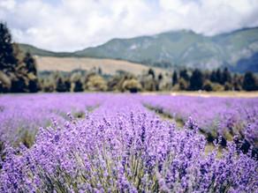 2021 Lavender Celebration