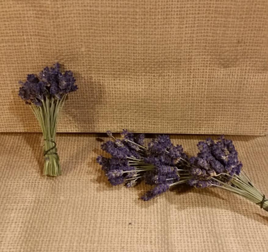 Bunched lavender at Cowlitz Falls Lavender Company