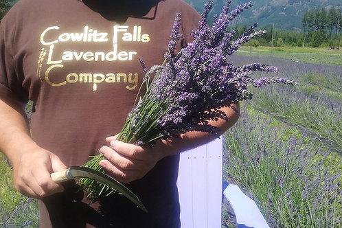 10 Fresh Cut Lavender Bunches