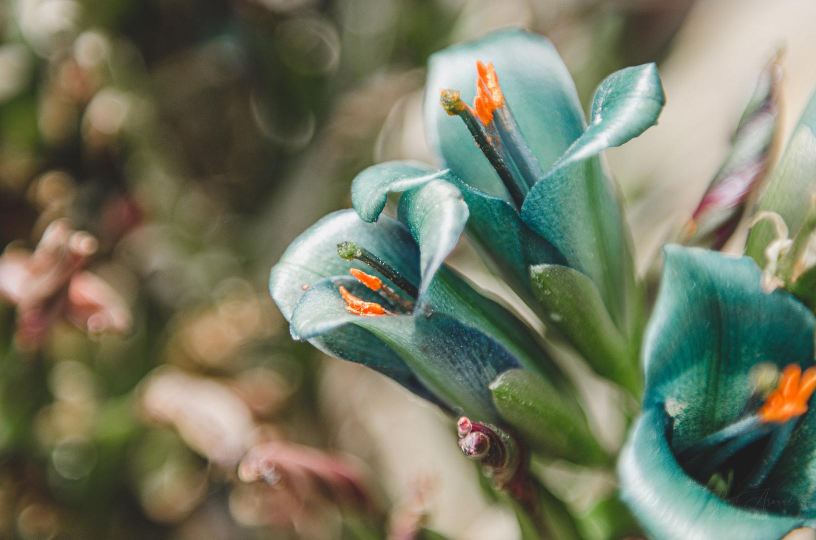 Nature Photography Romi Nicole Schneider