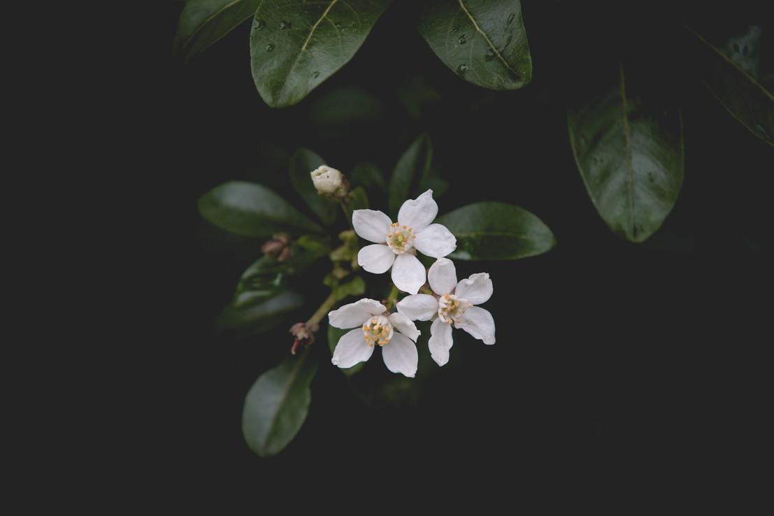 Nature by Romi Nicole Schneider2.jpg
