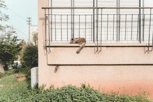 Catography by Romi Nicole Schneider