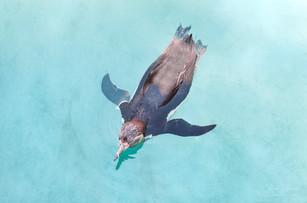 Animal Photography Romi Nicole Schneider