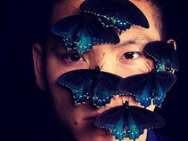 GIAPPONE, TERRA DI MOSTRI: Farfalle