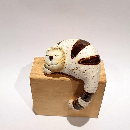 Kot z ogonem małybiały