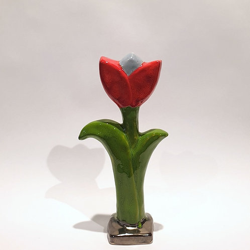Kwiat tulipan