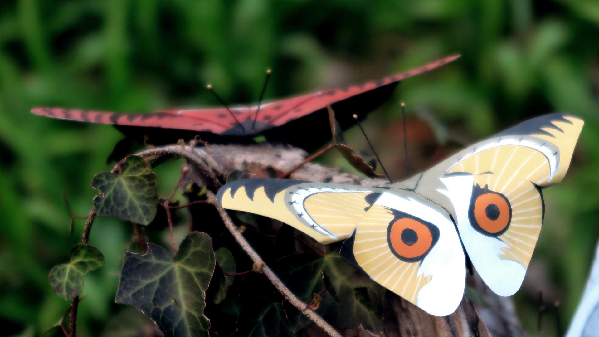 13 Butterflied Owls