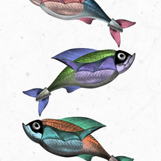 Oily Fishes