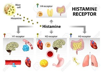 histamine receptoren.png