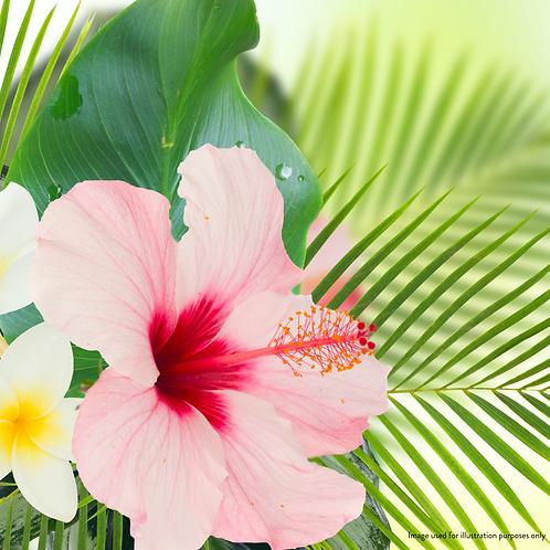 Hibiscus Flower Powder (10g)