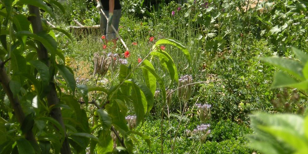 Gemeinsames Gärtnern