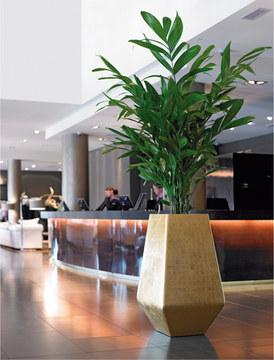 Plante dans lobby ou reception