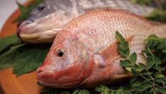 南国鯛(ティラピア)