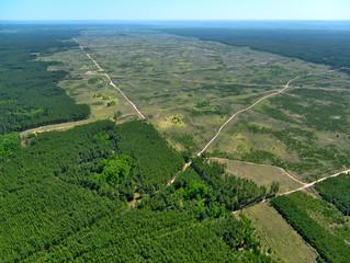 Seminar om avskoging
