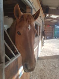 Cyrano cheval.png