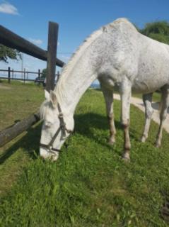 Diamond cheval.png