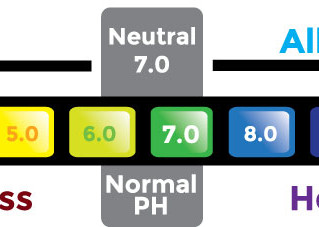 The PH Scale and Your Health.