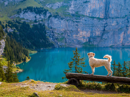 Five helpful tips for camping with your dog!