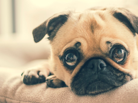 Five human foods that are actually TERRIBLE for your dog.