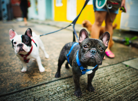 Six Great tips to help you walk your dog like a pro!