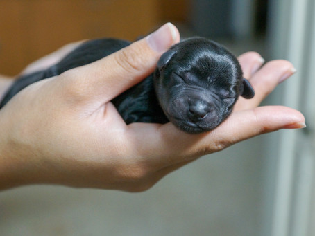 Just got a puppy? Heres what you NEED to know!