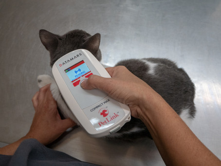 Microchipping for your pet and you!