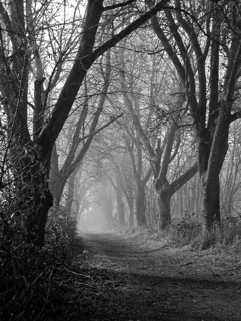 34 | Fog in Path Woods