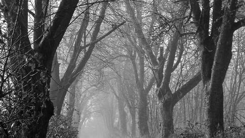 34_Fog-in-Path-Woods.jpg