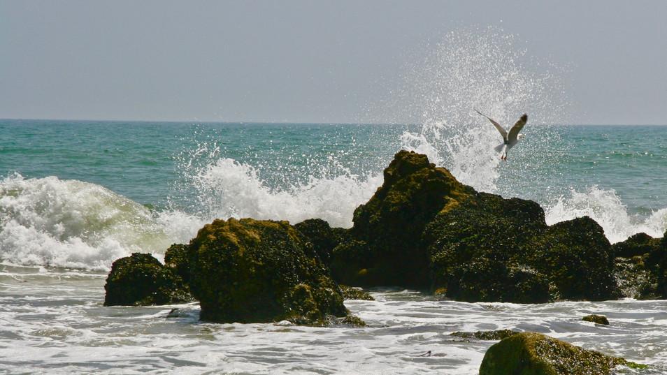 01_Gull Leaping.jpeg