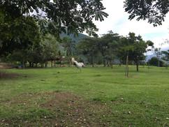 28   Rearing Horse