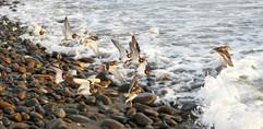02 | Birds Take Flight