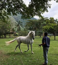 29   Taming a Horse
