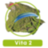 vita2.png