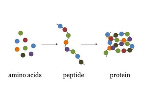 Peptides = Beautiful Skin